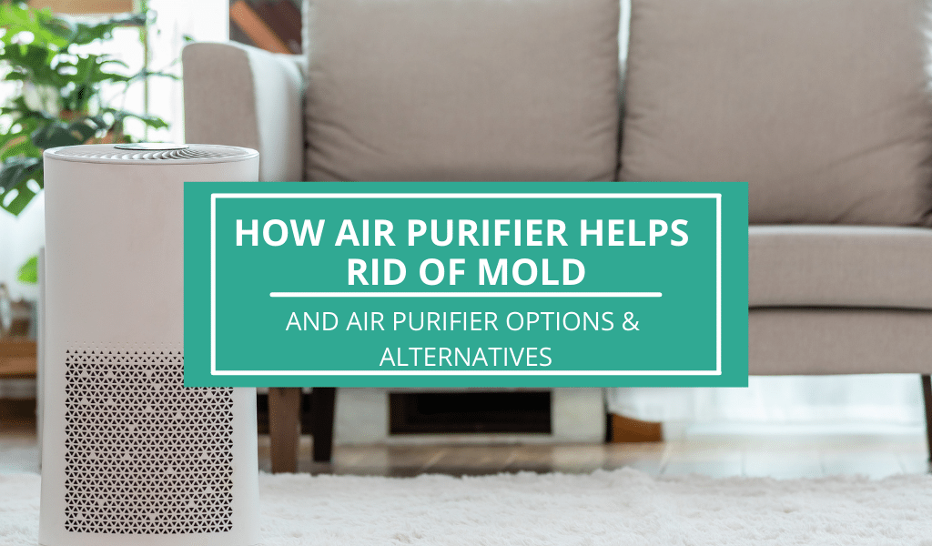 how air purifier helps with mold